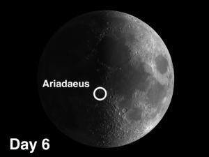 Ariadaeus